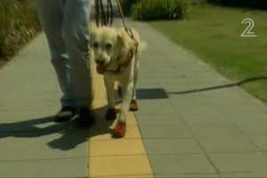 В Израиле придумали специальные ботинки для собак