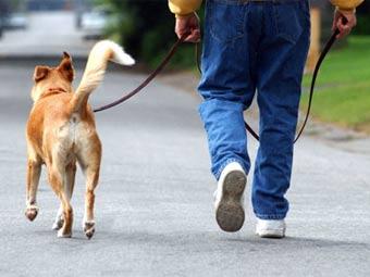 Владельцы собак двигаются на 34% больше – подсчитали ученые