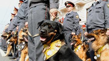 МВД РФ увеличит число служебных собак на 40% - Нургалиев