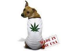 Животных будут лечить марихуаной