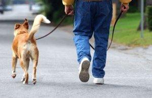 """Объясните-ка собаке, что ей надо """"потерпеть""""!"""