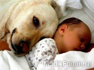Спать с домашними животными опасно