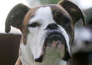 Собака нашла новых хозяев благодаря сходству с Призраком оперы