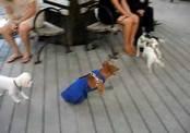 Собака-инвалид радуется жизни