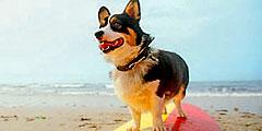 В Риеке появился первый пляж для собак (Хорватия)