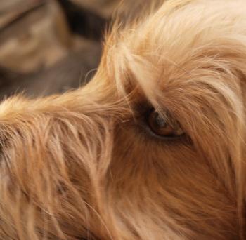Собачья речь