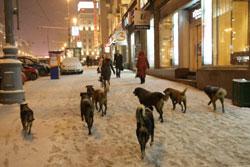 Бездомных собак из Москвы депортируют в Ярославскую область