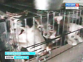 Челябинский питомник для собак российские зоозащитники окрестили живодерней
