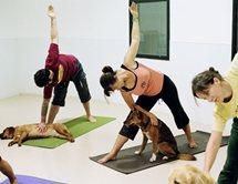 Йога с собаками: совместите приятное с полезным