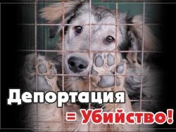 20 сентября в Москве пройдет акция против депортации собак