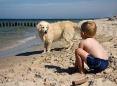 На Кипре появятся пляжи, где можно отдыхать с собаками