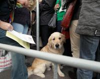 Юрий Антонов и защитники животных вступились за бездомных собак Москвы