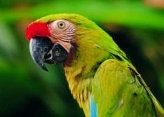 В Англии одну из фирм охраняют сторожевые попугаи
