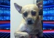 Пропавшую собаку нашли в 5 000 км от дома (США)