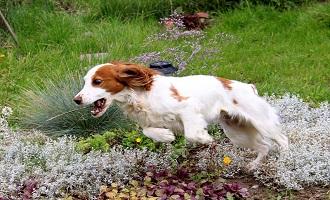 Собака спасла хозяйку, заплутавшую в лесу (Вологодская область)