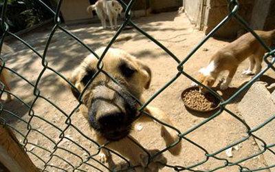 В Португалии из-за безработицы и кризиса бросают животных