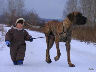 В Омске детям до 14 лет запретили выгуливать собак