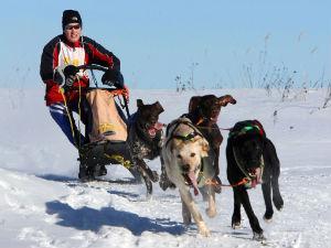 В Самаре пройдут гонки на собаках