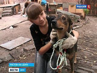 В Ростове закрывают приют для животных, 20 собак ищут новых хозяев
