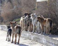 На строительство приюта для бродячих собак в Самаре потратят 35 миллионов