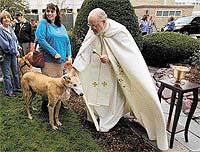 Благословите мои четыре лапы и хвост, святой отец (США)