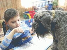 Собачья работа. При каких болезнях поможет канистерапия?