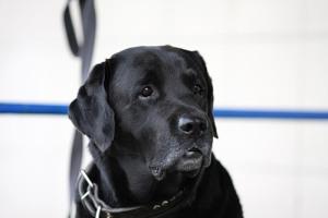 Власти Нью-Йорка вводят закон против хозяев, оставляющих собак на привязи более трех часов