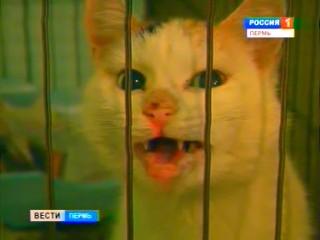 В Перми предлагают создать службу спасения животных