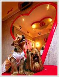 Романтика для бразильских собак