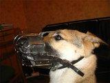 В Лос-Анджелесе запретили домашним собакам лаять более 10 минут - штраф $1000