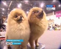 В Нижнем Новгороде состоялась Международная выставка кошек и собак