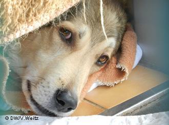 Под защитой закона, или Почему в Германии нет бродячих собак
