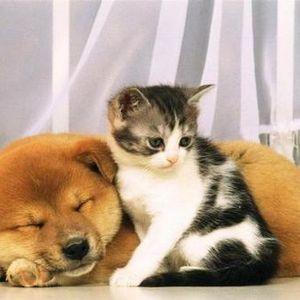 ЕС планирует ввести обязательную маркировку для всех собак и кошек