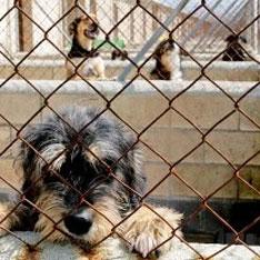 Чиновник погорел на собаках