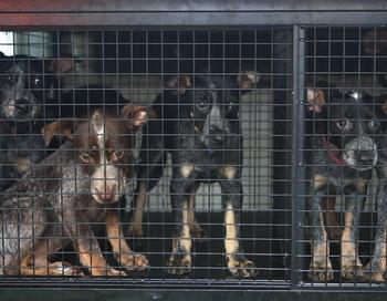 Пожилой бельгиец забыл своих собак на месте отдыха