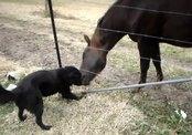 Собака и лошадь играют в мяч друг с другом