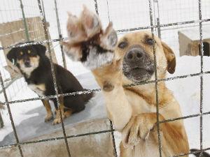 Защитники животных в Тольятти вышли на митинг