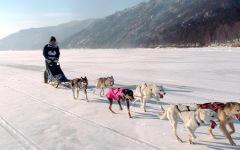 На Байкале туристам предложили сафари на собачьих упряжках
