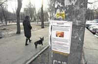 Владельцы отравленных в Петербурге собак начали протестовать