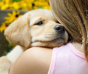 В Петербурге ребенка отравили собачьим ядом