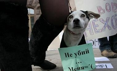 Власти Киева согласились построить приют для животных (Украина)