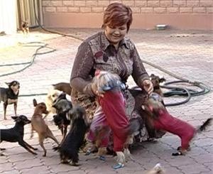В Донецке хотят ввести налог на всех домашних животных (Украина)