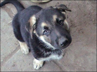 Новый законопроект «Об обращении с животными» еще хуже предыдущих (Беларусь)