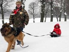 В Омске в Международный день инвалидов пройдут катанья на собаках
