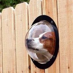 Иллюминатор для собаки