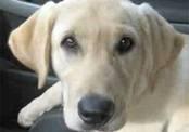 Собака спасла выброшенных на дорогу котят