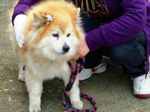 Умерла самая старая собака в мире