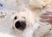 Собака балдеет в ванне