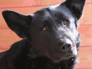 В Казани неизвестные массово травят собак