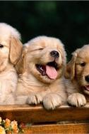 В Киев привезут лучших собак всех пород со всего мира